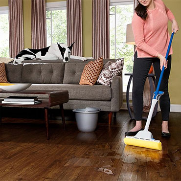 Pro Tips for Cleaning up Pet Stains
