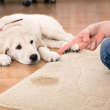 Which Carpet is Best for Pets?
